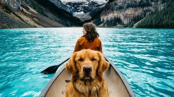 Что нужно знать, путешествуя с животными?