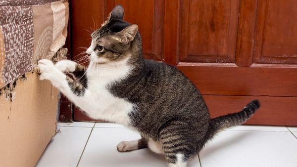 Если кошка царапает мебель