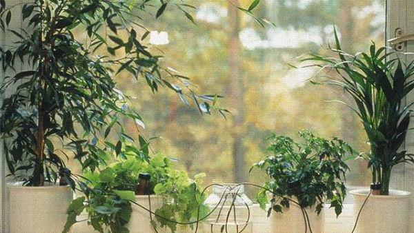 Как быть с комнатными растениями, уезжая на отдых
