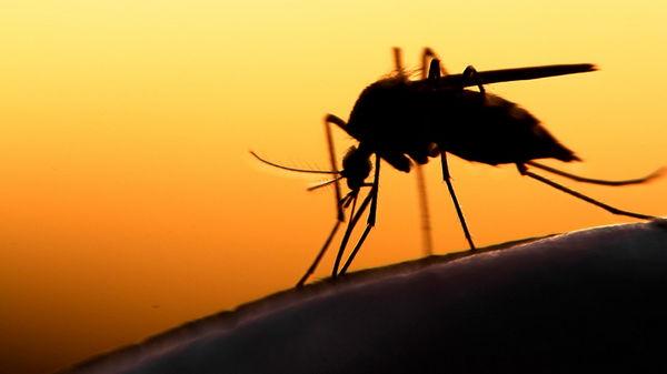 Как летом избавиться от комаров: практические советы