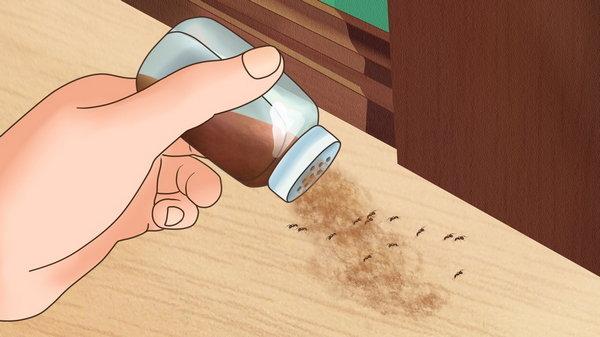 5 эффективных способов избавиться от насекомых в вашем доме