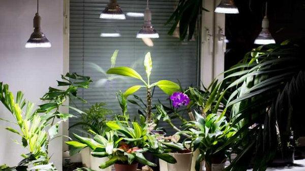 8 растений, которые себя отлично чувствуют даже в затемненных закоулках вашей квартиры