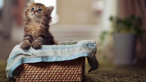 Как обеспечить котенку комфортную жизнь в новом доме