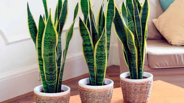 12 фантастических домашних растений