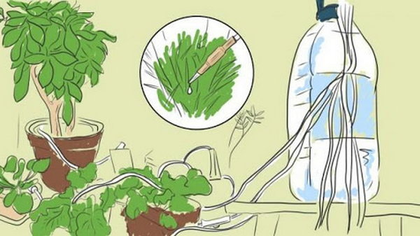 Растения будут поливать себя сами