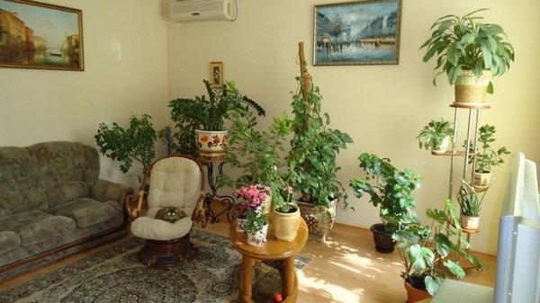 Волшебная магия комнатных растений
