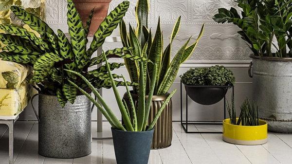 Как с помощью растений очищать воздух в помещение