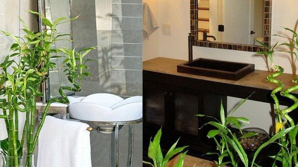 Этим растениям будет комфортно даже в ванной комнате без окна