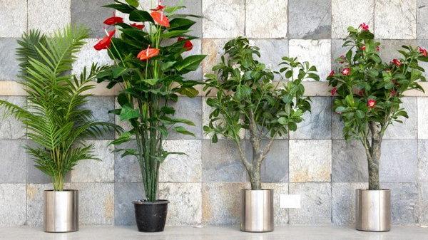 6 полезных комнатных растений