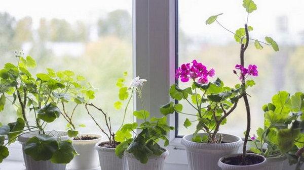 4 домашних растения, которые благотворно влияют на здоровье человека