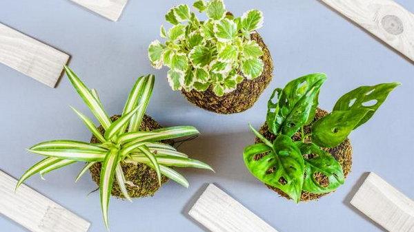 8 ядовитых комнатных растений, которые отравляют организм