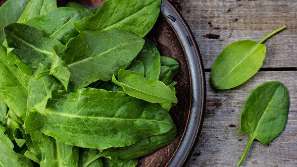 Заготовки из щавеля: как надолго сохранить зелень свежей