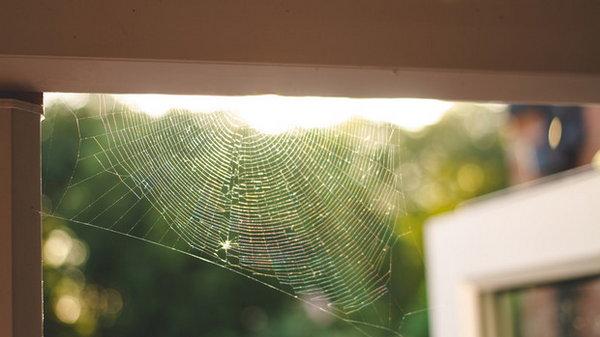 Почему в доме много паучков