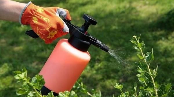 Инсектициды: почему они так важны для тех, кто хочет избавиться от вредителей урожая