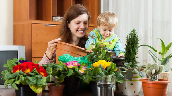 Список растений для детской комнаты