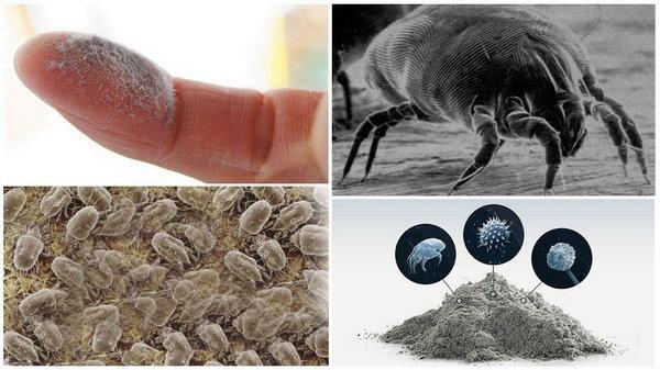 Как избавиться от пылевых клещей в доме
