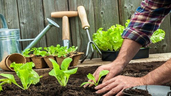 Хитрости для огородников