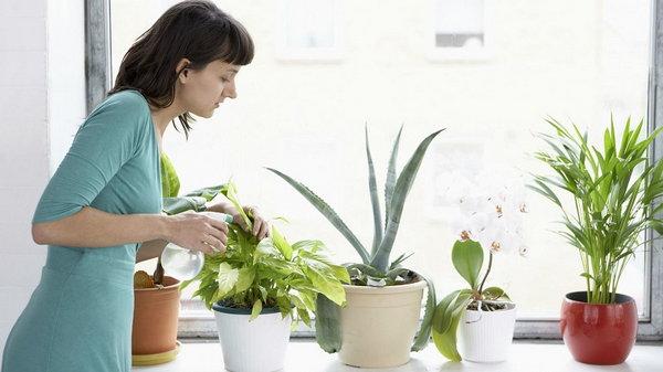 Тонкости ухода за комнатными растениями