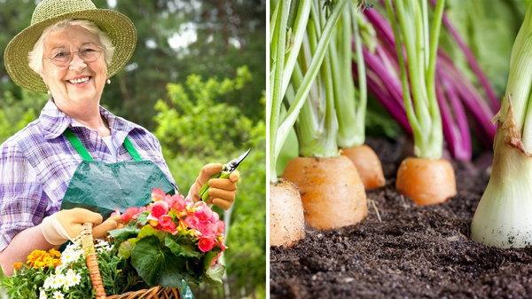 Почему нужно больше времени уделять садоводству