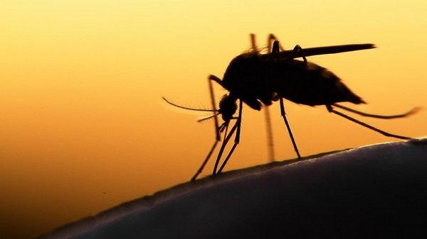 Список отгоняющих комаров от участка растений