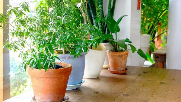 Подбор комнатных растений