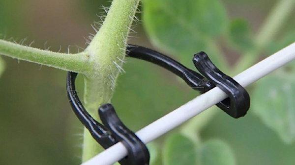 Обрезка и подвязка растений