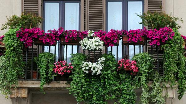 Цветочный рай на балконе