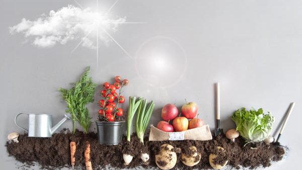 Приветы с полей. Какие сельхоз культуры можно выращивать на даче