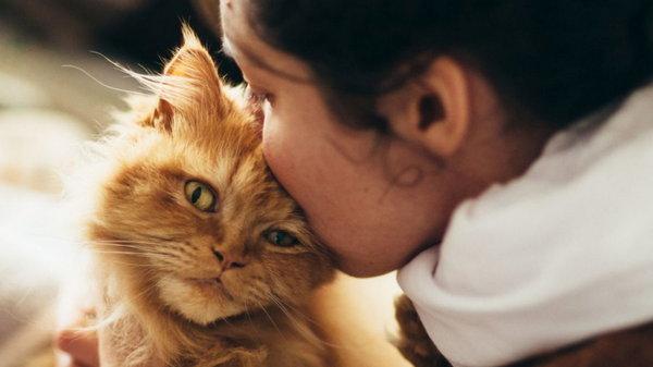 Что может произойти, если целовать домашних животных