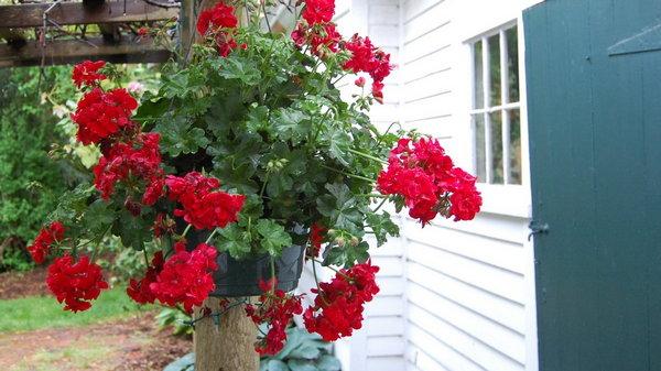 Какие цветы подходят для Вас по вашему знаку зодиаку