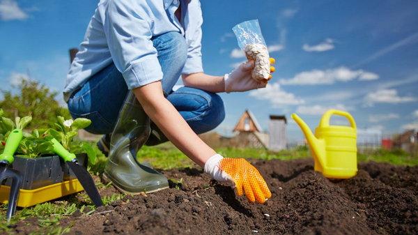 Почему не нужно поливать семена после посева