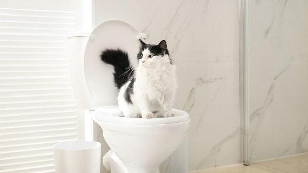 Зачем ставить кошачий лоток на возвышение