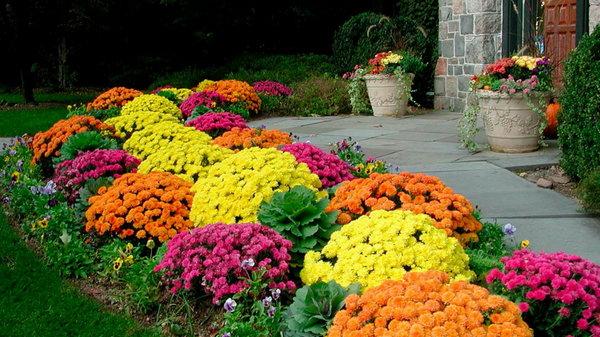 Какие цветы выращивают на даче опытные садоводы