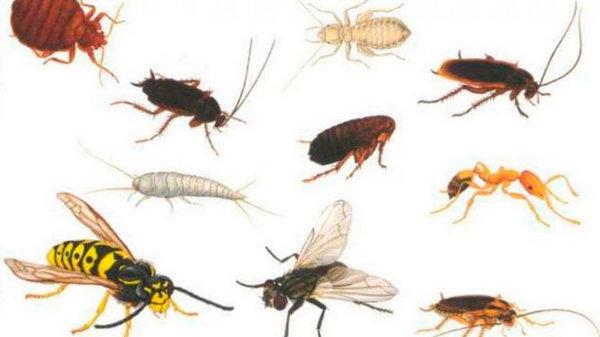 Вся правда о домашних насекомых в квартире