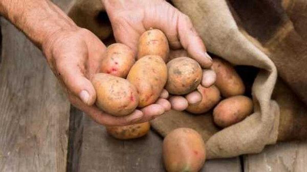 После применения этого удобрения на дачном участке не знали, куда девать овощи