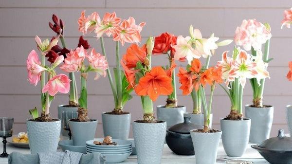 Комнатные растения и цветы в фен-шуй
