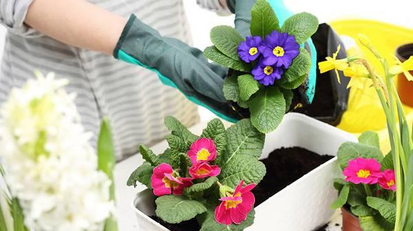 Особенности пересадки растений методом перевалки