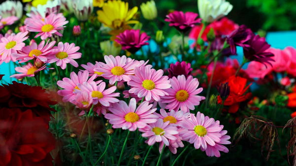 Квітів не буває багато!