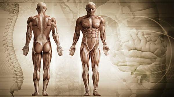 Ошеломительные факты о человеческом теле